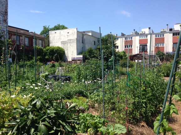 Although there is a waitlist for garden plots, locals can volunteer at the Southwark/Queen Village Community Garden and help cultivate fresh produce for the neighborhood.
