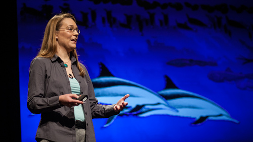 Kelly Benoit-Bird: Marine acoustics
