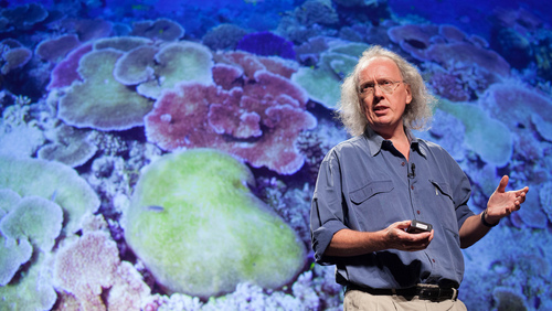 David Bellwood: Lessons from coral reefs