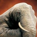 Great Hand Painting by Guido Daniele