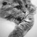 Impressive Cats Drawings by Paul Lung
