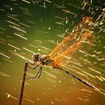2011 Winners of National Geographic Contest