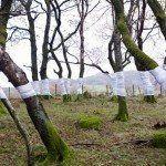 Zander Olsen's Tree Line
