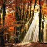 Nature Photography by Lars Van De Goor