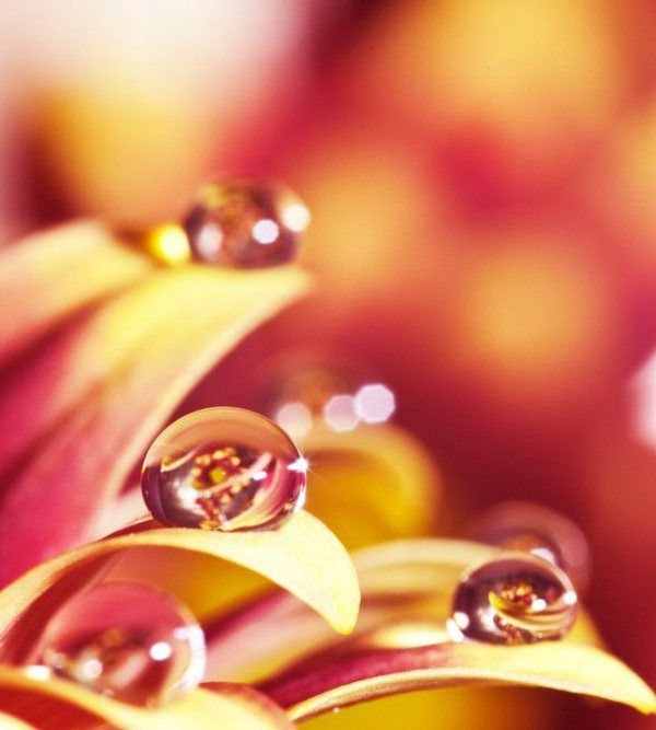 photographer-paul-quinn-water-drops-part2-7