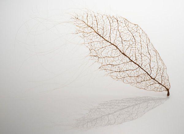 Jenine-Shereo-human-hair-leaves3