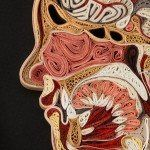 Quilled Anatomical Cross Sections by Lisa Nilsson