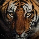 Realistic Wildlife Portraits by Cristina Penescu