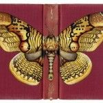 Butterflies on Books by Rose Sanderson