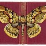 Butterflies on Books by Rose Sanderson