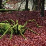 Land Art – Artistic Installations in Nature by Sylvain Meyer