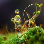 Morning Dew – Macrophotography by Diens Silver