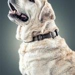 Man's Best Friend – Dog Portraits by Daniel Sadlowski