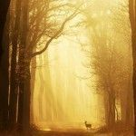 Through Woods Dark and Deep – Photographs by Nelleke Pieters