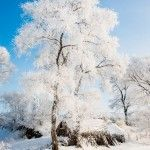 Snow Trees – Photographs by Xu Jing