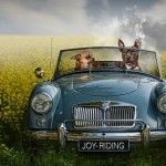 Doggy Day Trips – Digital Manipulations by Jeannette Oerlemans