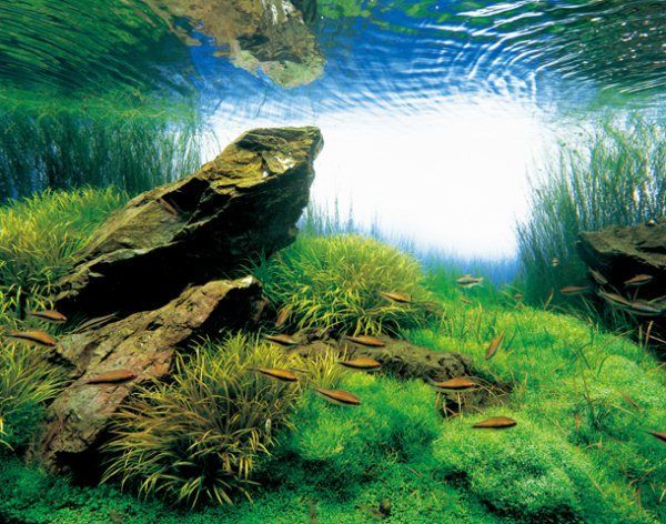 Great Serene Aquascapes By Takashi Amano | Pondly