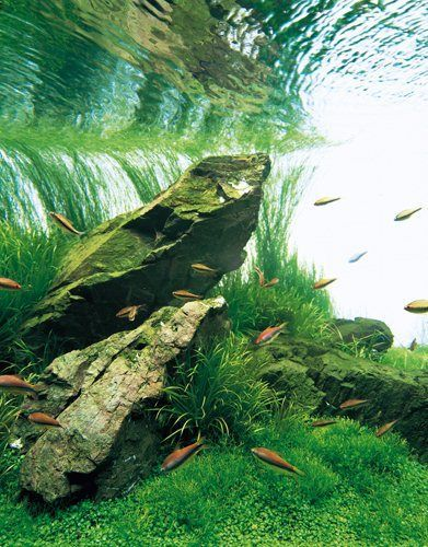 Serene Aquascapes by Takashi Amano - Pondly