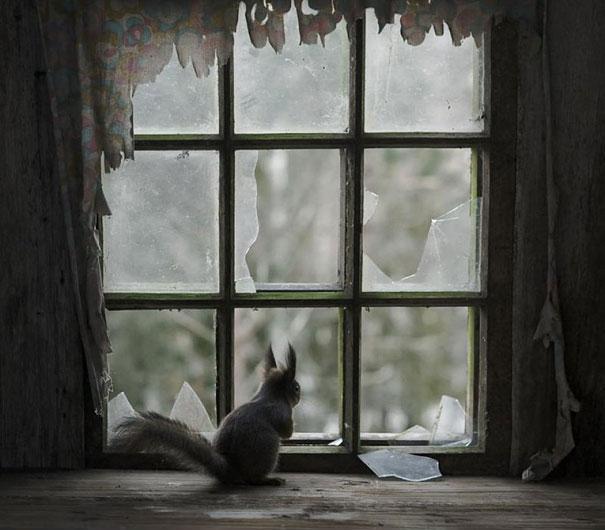 abandoned-house-animals-kai-fagerstrom-5