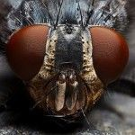 I See You – Insect Macrophotography by Alexandr Svetlovskiy