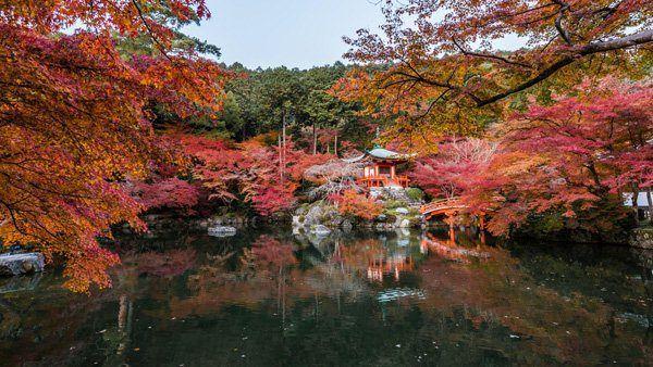 Hidden-in-autumn-leaves-by-Takk-Bulkington