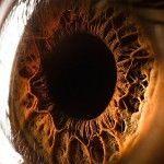 Optic Macrophotography by Suren Manvelyan