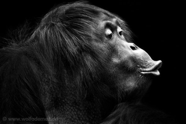 Pucker up dramatic black and white animal photography by wolf ademeit pondly
