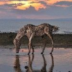 Equine Pursuits – Fabulous Driftwood Horse Sculptures by James Doran-Webb