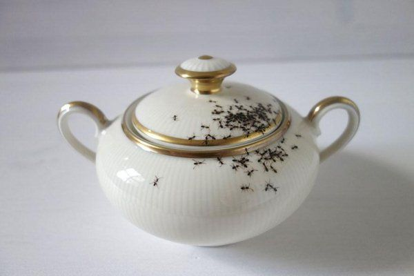 porcelain-dishes-covered-in-painted-ants-1