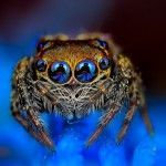 Cute Up Close – Arachnid Macrophotography by Jimmy Kong