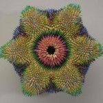 See Urchins – Colored Pencil Sulptures by Jennifer Maestre