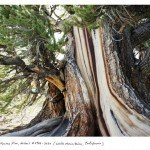 The Oldest Living Things in the World – Epic Images by Rachel Sussman