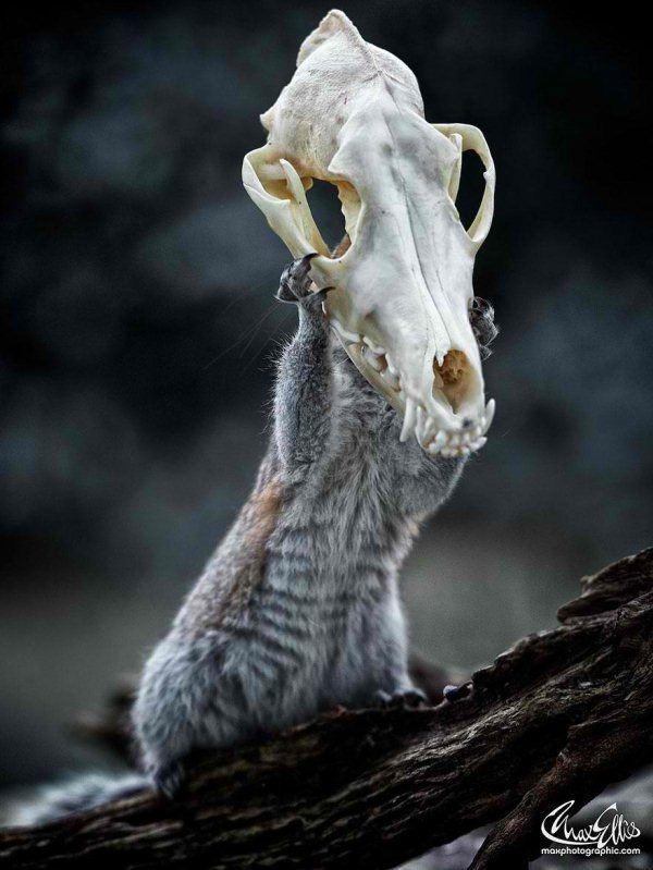 wildlife-photography-squirrels-max-ellis-1__880