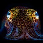 In the Big Blue – Underwater Photography by Mattias Ormestad