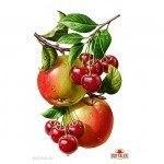 Fresh – Food Illustrations by Inorama