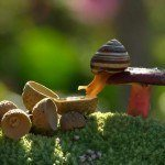 Exquisite Mushroom Photography by Vyacheslav Mishchenko