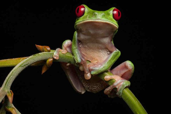 frog-photography-robin-moore-4