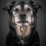 Pete Thorne Old Faithful dog portrait