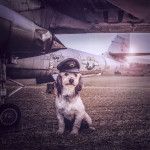 Photographer Takes Photos of Stray Dogs for Adoption