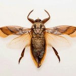 Insect Art by Chris Brand and Evan Skrederstu