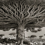 Ancient Trees Photography by Beth Moon