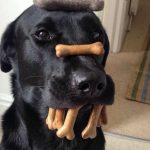 Funny Dog Pictures - 21 Photos Showing Why Dogs Rule