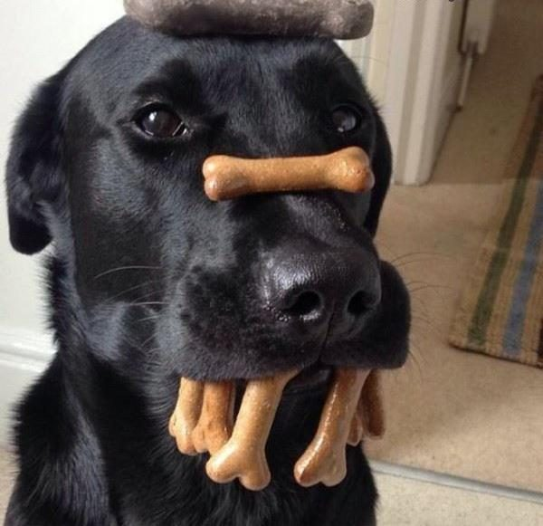 11-pondly-funny-dog-pictures