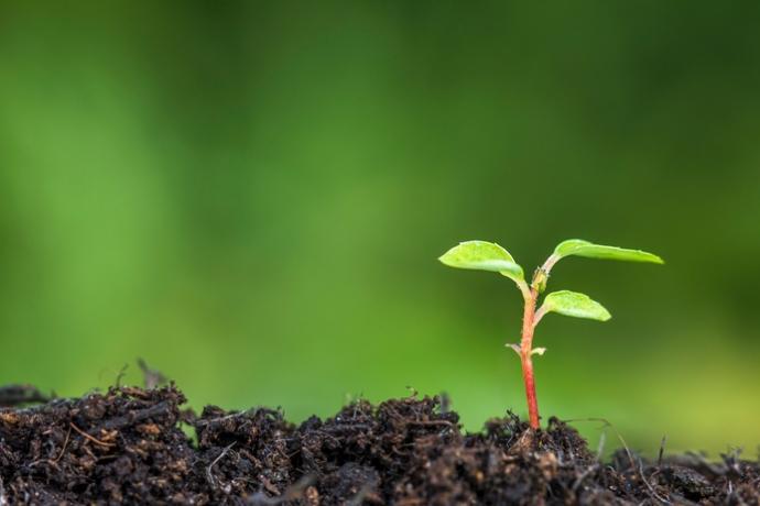 A semente da obediência