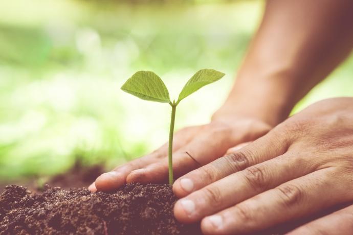 Plante agora o que você quer colher amanhã
