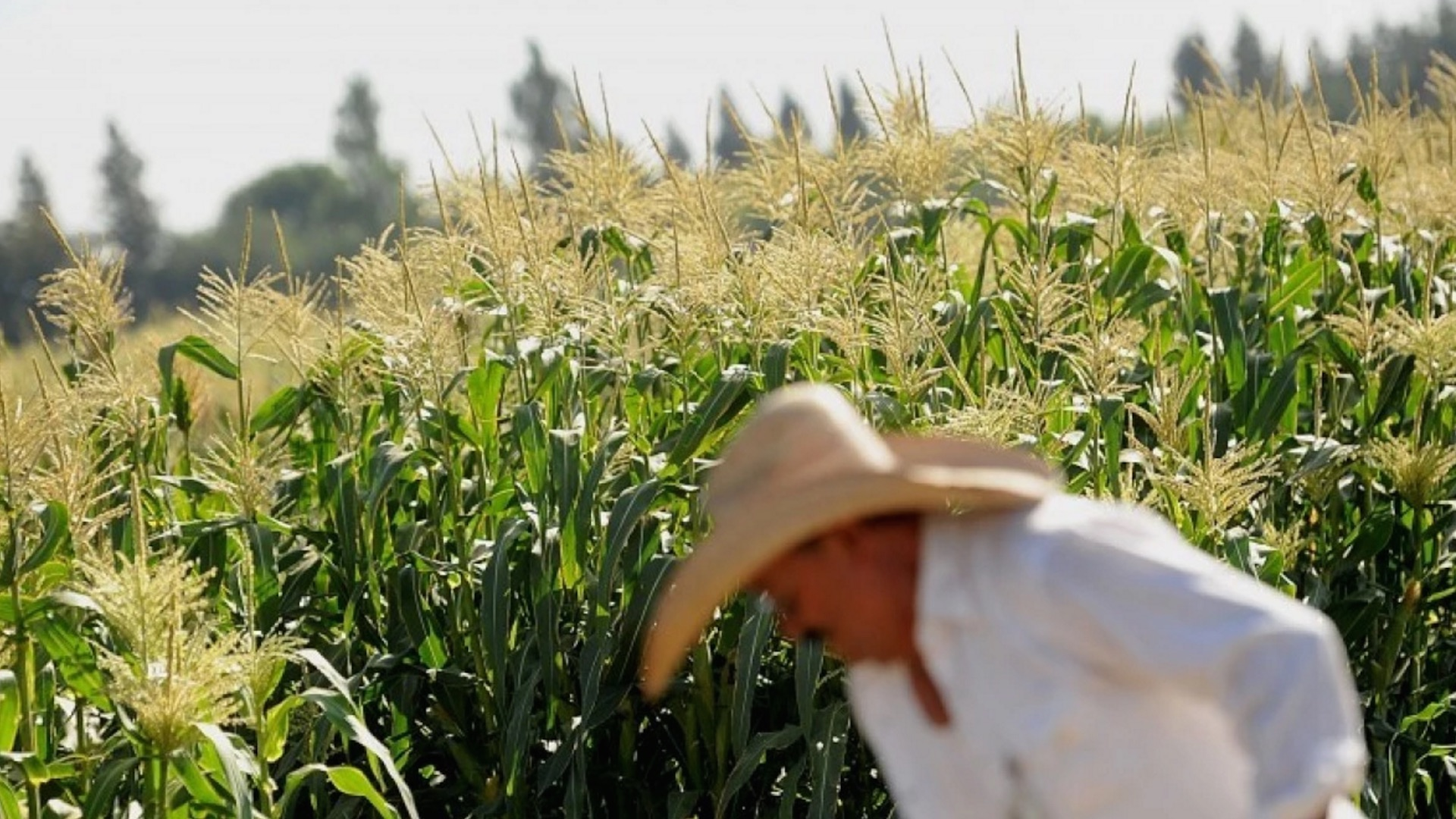 107 Nobel laureates sign letter blasting Greenpeace over GMOs