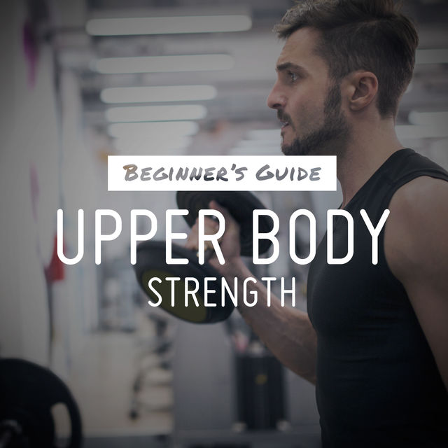 upper body workout for beginners pdf