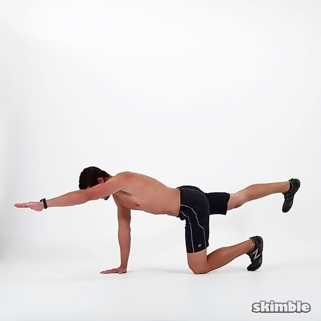 Elbow to Knee Bird Dogs - Exercise How-to - Workout ...