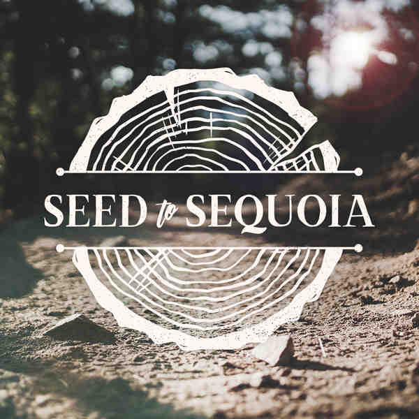Seed to sequoia web square
