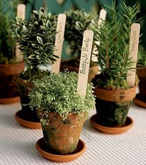 Caption: Potted Herbs, Credit: Google Images